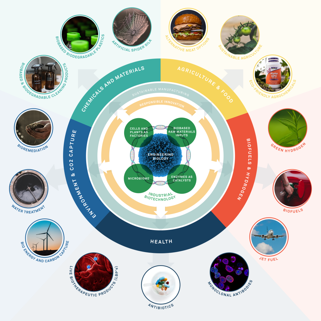 Infographic showing the IBLF's work in concentric circles, with lab-based activities such as engineering biology at the centre, and practical real-world applications such as biofuels on the outer ring.